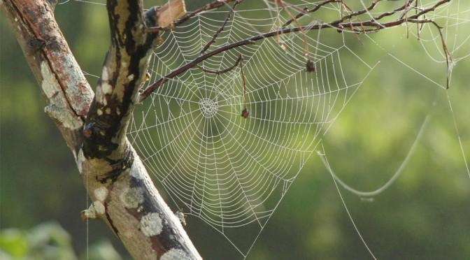 ITK – Lösungen / Web-IT Strategien